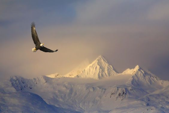"500px / Photo ""Soaring High"" by Mark Lissick"