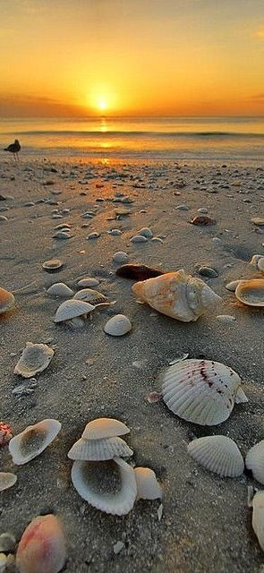 The trail of shells lead your eye to the sunset off in the distance making that the main part of this picture.