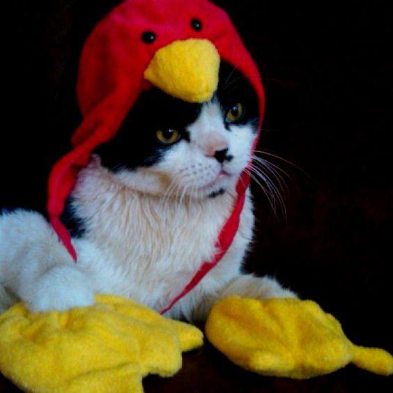 Turkey Charlie