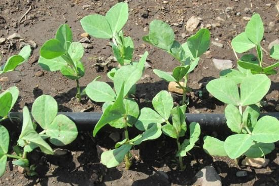 Did you know that in almost any climate you can grow fresh salad greens and other veggies throughout the fall and winter? Here are some basics about cold-season gardening.