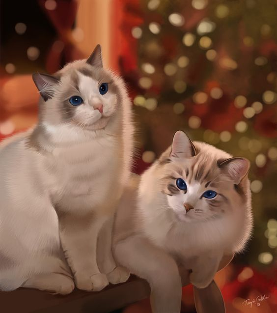 Ragdoll Christmas by silver-spurs.deviantart.com on @deviantART