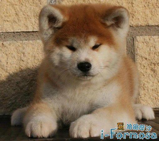 狗狗跟你再麻吉,也不會說的21個秘密-i-Formosa興趣嗜好區-寵物物語-i-Formosa.com 福爾摩沙 -