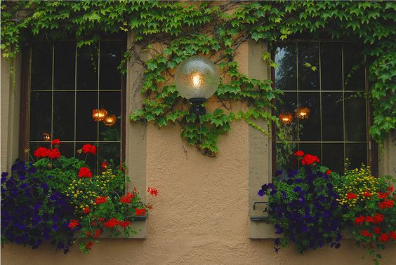 Windows with flowers boxes in Germany