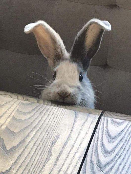 Hi Cute Animals Pet Bunny Cute Creatures