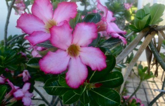 Flores. Por: Pamela Nebreda. 27/12/16. ISO200. Velocidad 1/40. f/13 Distancia focal 22mm.
