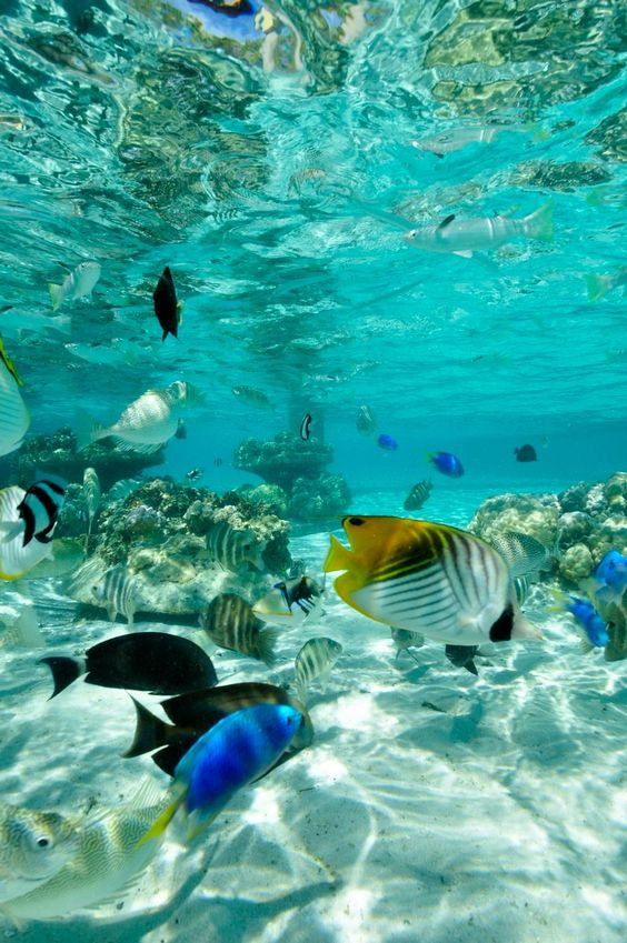 Bora Bora Quisiera estar en un lugar así...quisiera estar ahí...