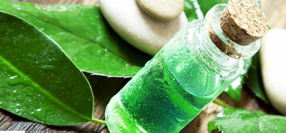 18-Amazing-Benefits-Of-Tea-Tree-Oil-For-Skin-Hair-And-Health.jpg (1286×600):