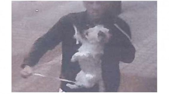 British yob pounds small dog on a lead, hits man who challenged him! Act Now! | YouSignAnimals.org