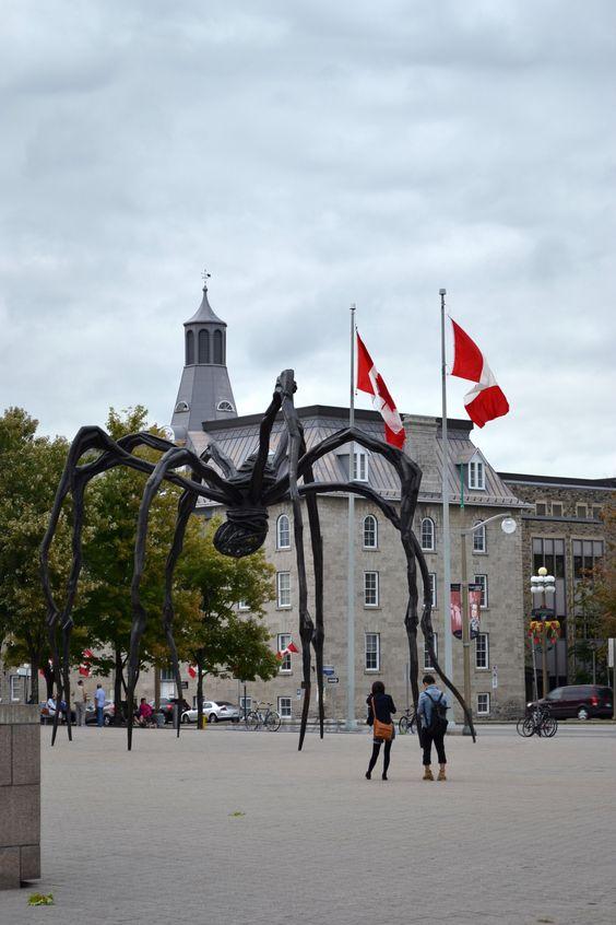 berühmte Spinne von Ottawa
