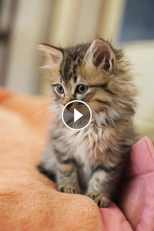 Video So Many Cute Kittens Videos Compilation 2019 Upa7icheqx