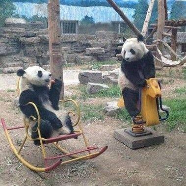 お話をするパンダ