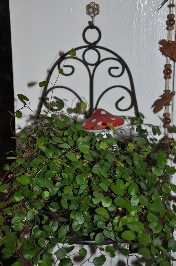 Auch Pflanzen hängen geschützt.