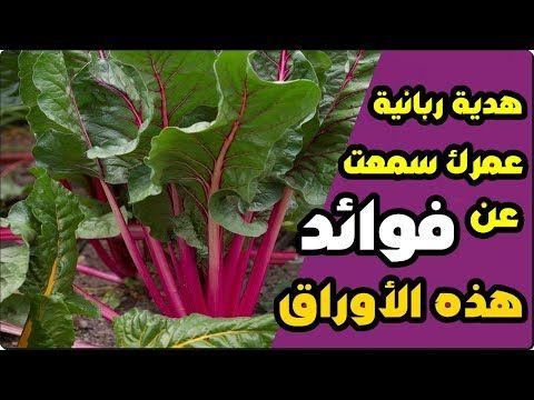 إذا رأيت أوراق هذا النبات احضرها فورا الى منزلك هدية ربانية منحها الله لنا ونحن نتناول الادوية Youtube Herbs