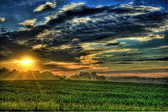 Uga Iron Horse Posters - Iron Horse Sunrise Young Corn and Silos Poster by Reid Callaway