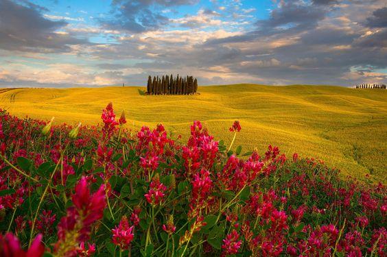 ***Wonderland (Tuscany) by Simone Panzeri on 500px
