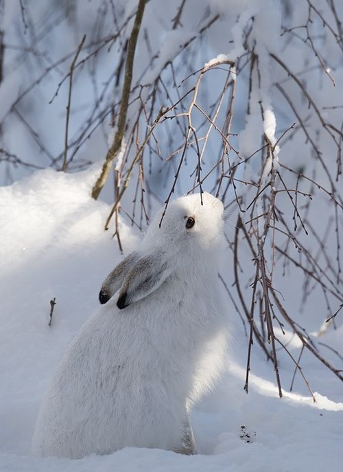 Lovely snow #bunny from Tumblr