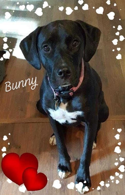 Adopt Bunny On In 2020 Dog Adoption Animal Rescue Pet Adoption
