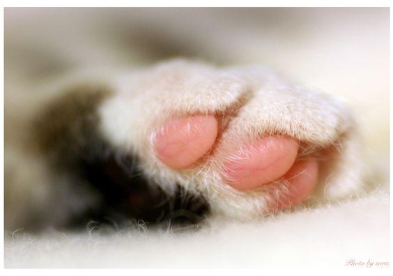 Yui's paw