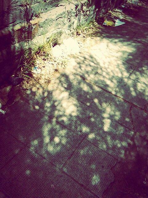Arboles y sombras