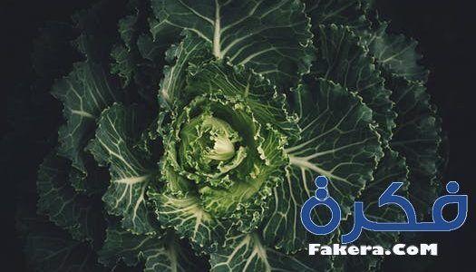 تفسير حلم رؤية الكرنب في المنام موقع فكرة Vegetables Backyard Vegetable Gardens Easy Healthy Breakfast