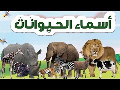 تعلم أسماء الحيوانات للاطفال Animals For Kids In Arabic Youtube Animals Animals For Kids Kids