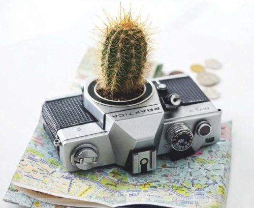 Cool #centerpiece with a #cactus, #map and #camera