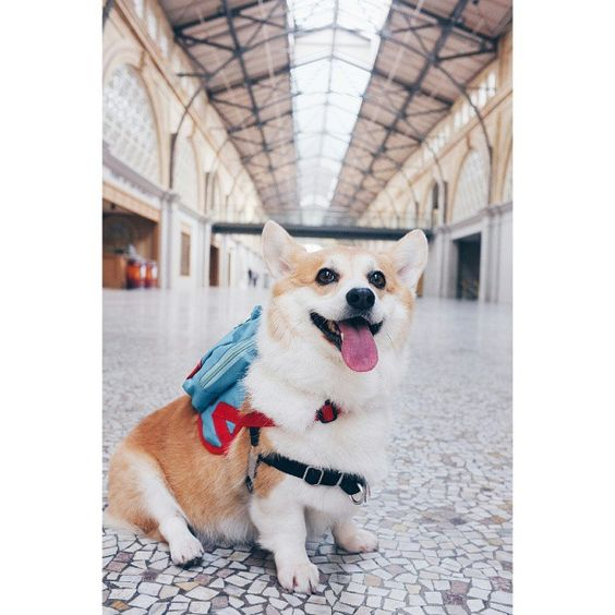 """Gawrsh, it's National #GoofOffDay!  Enjoying the afternoon at the #FerryBuilding  #7x7SundayBest #sneakersthecorgi Vote to make me the next Kate Moss!…"""