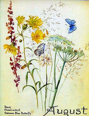 August by Edith Holden (1871-1920).: