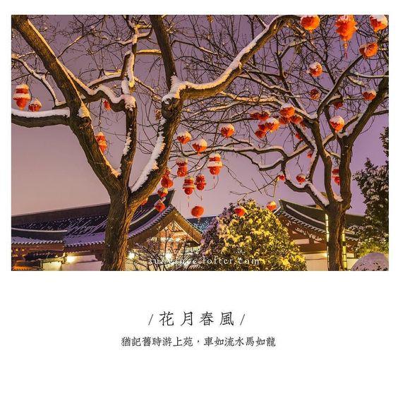 曲江夜 #xian