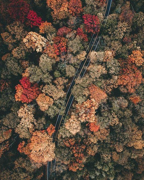 Roads of fall. ⠀ ⠀ ⠀ ⠀ #liveadventurously #simplyadventure #wildme #natureaddict #huckberry #travelstoke #keepitwild #roamtheplanet #getoutdoors #earthfocus #campvibes #wherewillwegonext #lifeofadventure #neverstopexploring #hbouthere #wearestillwild #vscogrid #watchthisinstagood #aov #mkexplore #seeyououtthere #mextures #adventuretillwedie #alifealive #themountainiscalling #letsgosomewhere #hikefurther  #mizulife #stayandwander #wildernessculture