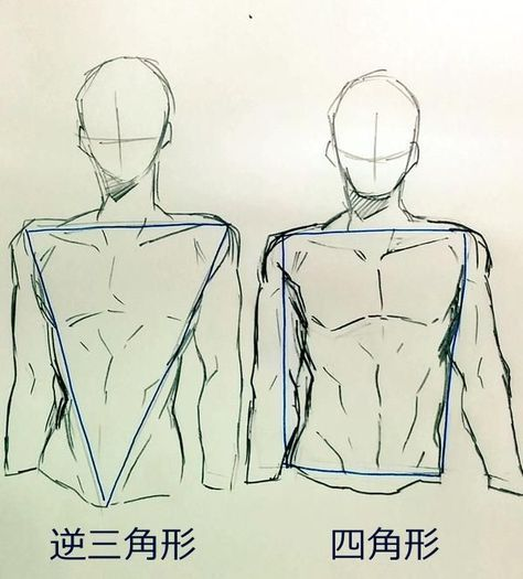 30 How To Draw Body Shapes Step By Step In 2020 Anatomy Sketches Anatomy Art Sketches