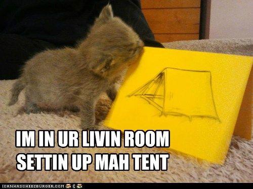 Camping Kitten