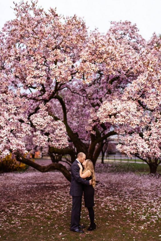 Cherry blossom trees make such a gorgeous engagement photo backdrop | Jason Thomas Crocker Photography: