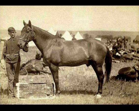 Comanche, a mixed breed horse who survived General Custer's detachment of the US 7th Cavalry at the Battle of the Little Bighorn.  In April 1878, Colonel Samuel D. Sturgis issued the following order:  (1.) The horse known as 'Comanche,' (...), his kind treatment and comfort shall be a matter of special pride and solicitude on the part of every member of the Seventh Cavalry to the end that his life be preserved to the utmost limit. (...)