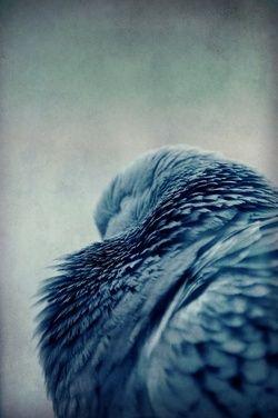 plumes volatiles .