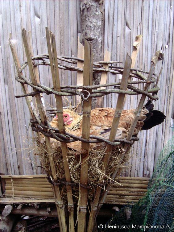 mère poule - Toamasina