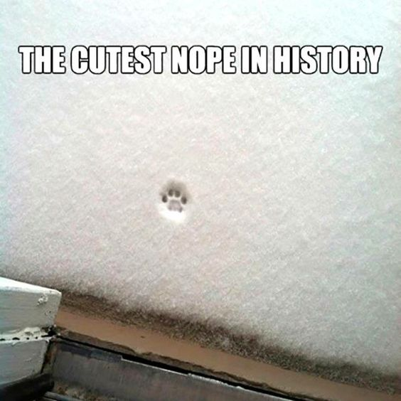 """Cutest """"Nope"""" in history"""