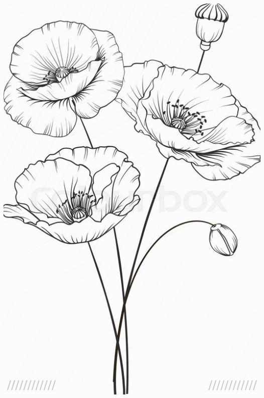 Stock Vektor Von Mohnblume Kunst Grun Flower Sketches Poppy Flower Drawing Flower Line Drawings