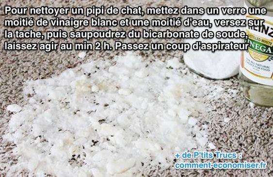 L'Astuce Pour Nettoyer un Pipi de Chat Facilement.