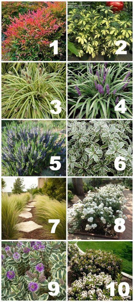 1000+ Ideas About Drought Tolerant Plants On Pinterest