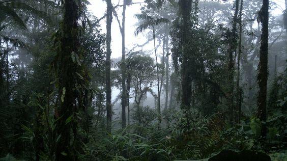 Oriente Ecuatoriano- Amazonia
