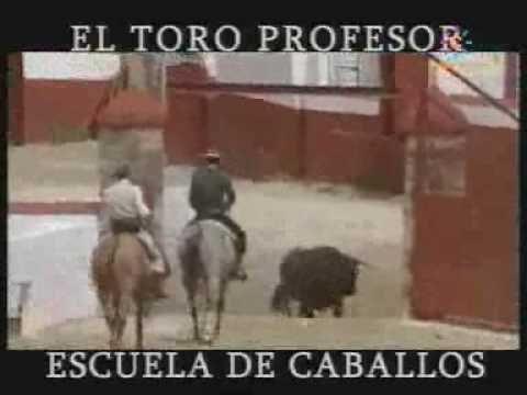 El toro profesor - Escuela de caballos