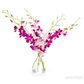Ordering orchids for your DIY wedding flowers? The Grower's Box (www.growersbox.com) offers a huge selection of Dendrobium Orchids in many different colors and at low wholesale prices. Easy to arrange and very long lasting, Dendrobium Orchids are spectacular flowers for weddings and events alike.