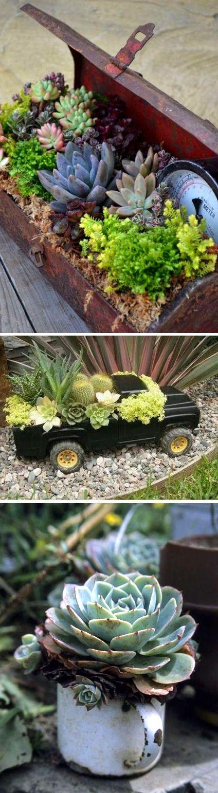 J'adore vraiment l'idée de fleurir n'importe quel objet avec des plantes grasses et des cactus !: