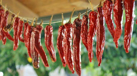 Peperoncini trocknen und einlegen, um sie haltbar zu machen