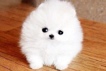 Ok u obviously know it can't get ANY CUTER than that.....ITS SO FLUFFY!!!!!!!!!!!!!!!!!!!!!