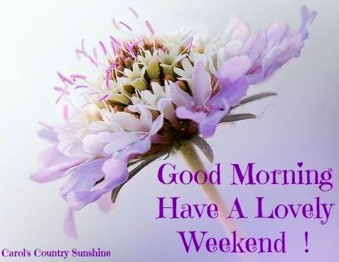 Good morning via Carol's Country Sunshine on Facebook: