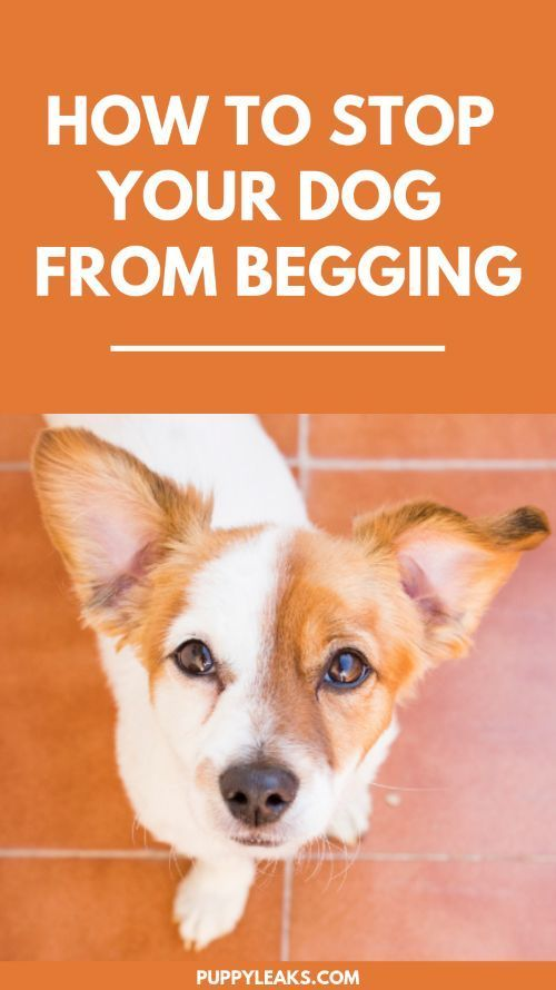 3 Easy Ways To Stop Your Dog From Begging Dog Training Training Your Dog Easiest Dogs To Train