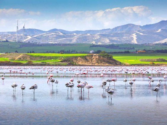 Кіпр солоне озеро з фламінго