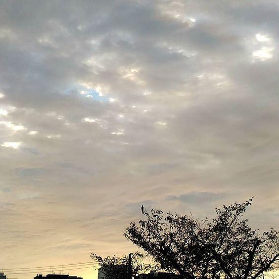 おはようございます今日も冷え込みました正面の枝でヒヨドリが鳴いています() #sky #cloud #空 #雲 #イマソラ #goodmorning #おはよう